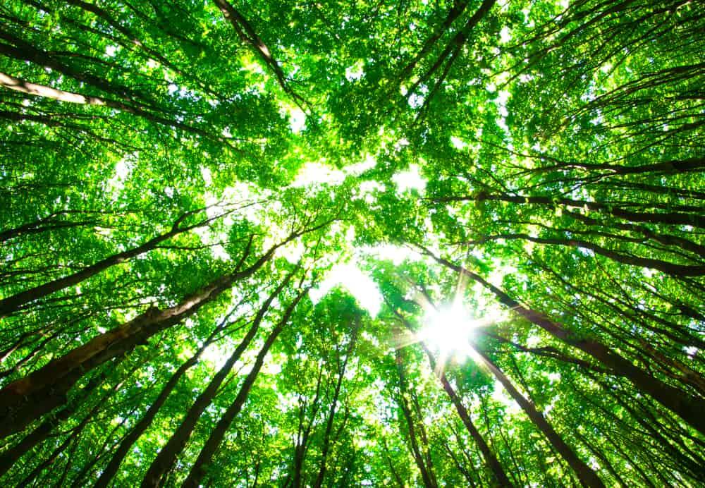green tree line sunlight