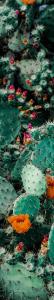 (credit: Adrianna Calvo) Flowering Cactus
